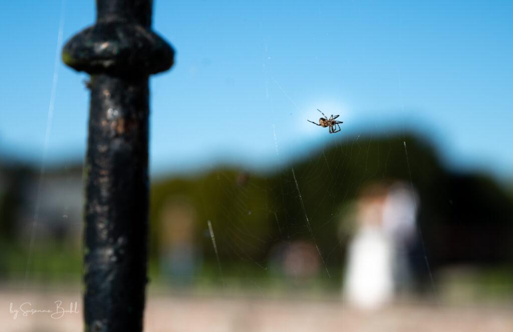 Bryllups fotograf Susanne Buhl-9868-2